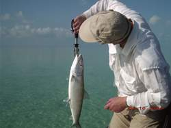 Bonefishing in the Turks and Caicos Islands