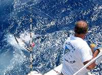 Billfishing tournament in the Turks and Caicos Islands